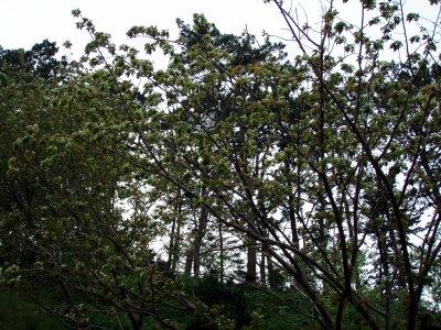 20070413_06.jpg